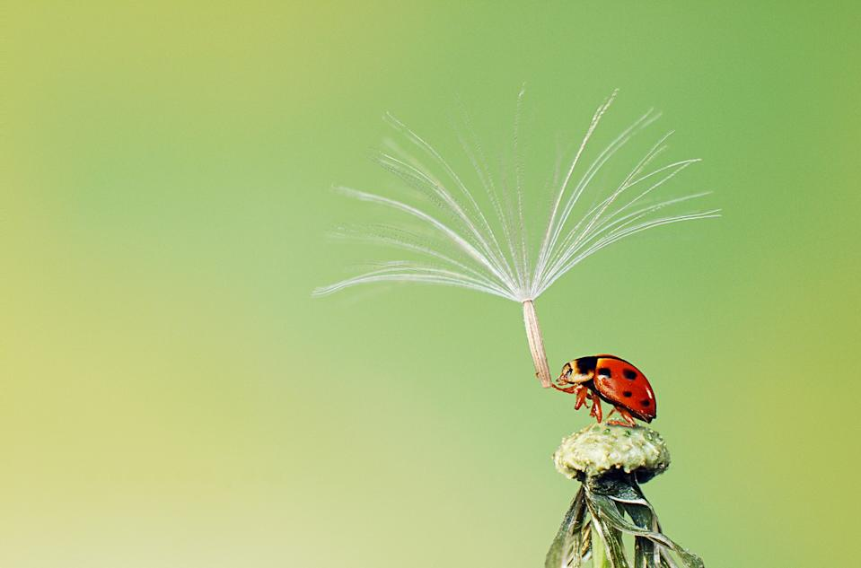 """The last pollen spore preparing to leave a ladybird trying to hold on, because it didn't want to be alone. (Hoang Hiep Nguyen, Vietnam, Shortlist, Nature & Wildlife, Open Competition 2013 Sony World Photography Awards) <br> <br> <a href=""""http://worldphoto.org/about-the-sony-world-photography-awards/"""" rel=""""nofollow noopener"""" target=""""_blank"""" data-ylk=""""slk:Click here to see the full shortlist at World Photography Organisation"""" class=""""link rapid-noclick-resp"""">Click here to see the full shortlist at World Photography Organisation</a>"""