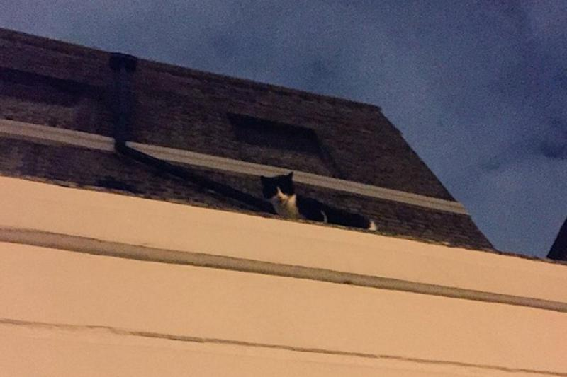 The cat was safely rescued - but suffered a broken tail - after getting stuck on the roof