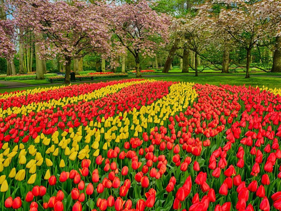 """<p><a class=""""link rapid-noclick-resp"""" href=""""https://www.goodhousekeepingholidays.com/tours/netherlands-holland-tulips-cruise-adam-frost"""" rel=""""nofollow noopener"""" target=""""_blank"""" data-ylk=""""slk:SEE HOLLAND IN 2022"""">SEE HOLLAND IN 2022</a></p>"""