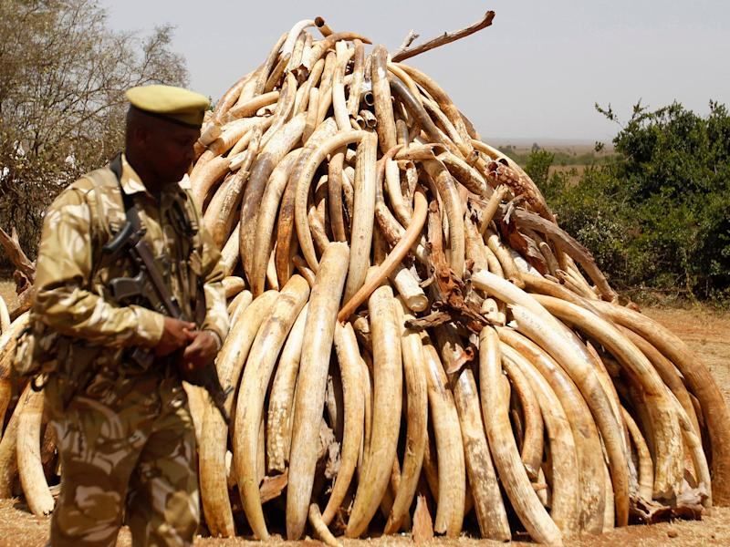 Ivory confiscated from smugglers and poachers has been burnt in the past but some countries wanted to sell it instead: Reuters