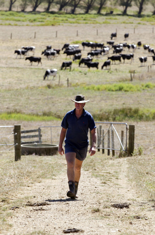 In this photo taken on March 11, 2013, farmer Peter Brown walks on the dry ground of his dairy farm near Ohinewai, New Zealand. A drought in New Zealand's North Island is costing farmers millions of dollars each day and is beginning to take a toll on the country's economy. (AP Photo/New Zealand Herald, Brett Phibbs) NEW ZEALAND OUT, AUSTRALIA OUT