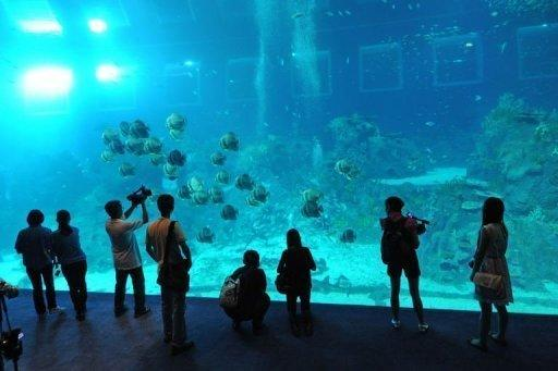 Visitors look at the open ocean habitat through the world's largest viewing panel at 36 metres wide by 8.3 metres high at the South East Asia aquarium, the world's largest oceanarium at Resorts World Sentosa Marine Life Park during a media preview in Singapore on November 20, 2012