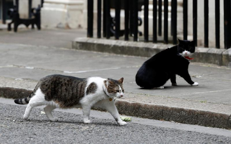 Larry the Downing Street cat walks past Palmerston the Foreign Office cat on Downing Street in London