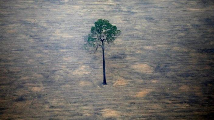 An aerial view of a deforested area in the Amazon