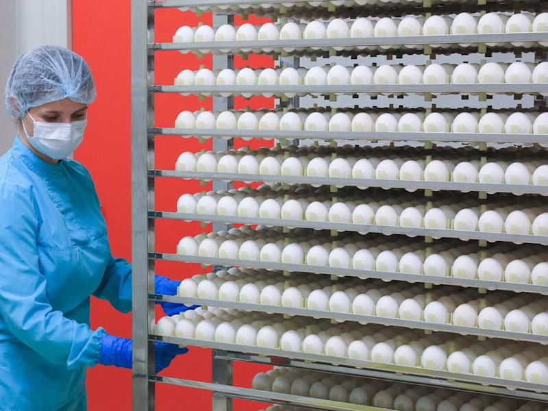 Production of a flu vaccine in a room for processing chicken embryos at a pharmaceutical plant in Russia in 2019.