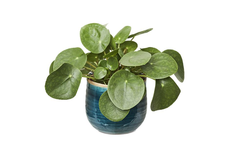 "<p>We challenge you to find someone who wouldn't be thrilled to add yet <em>another</em> plant to their living room set-up. This year, we have our eyes on a Chinese Money plant – talk about Instagrammable. <em><a rel=""nofollow"" href=""https://patch.garden/plants/chinese-money-plant-238/?variant=571"">Patch</a>, £14</em> </p>"