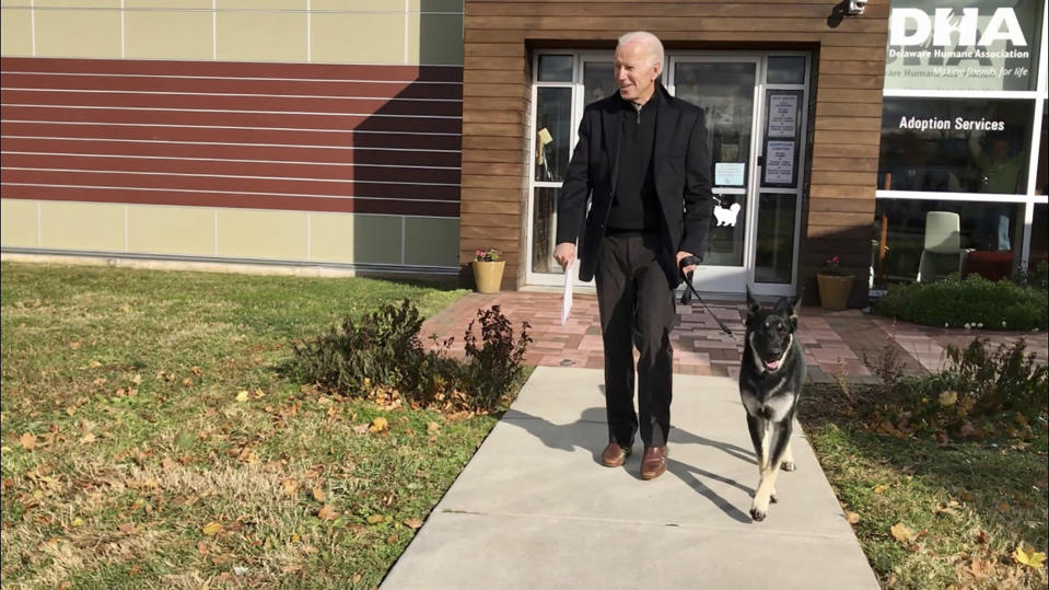 FILE - This Nov. 16, 2018, photo, file provided by the Delaware Humane Association shows Joe Biden and his newly-adopted German shepherd Major, in Wilmington, Del. President-elect Biden will likely wear a walking boot for the next several weeks as he recovers from breaking his right foot while playing with his dog Major on Saturday, Nov. 28, 2020, his doctor said. (Stephanie Carter/Delaware Humane Association via AP)