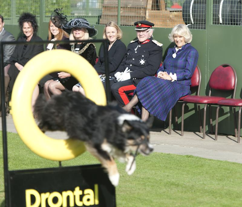 Camilla Parker Bowles taking in the action at the Essex Dog Training Centre in Brentwood, October 2011.