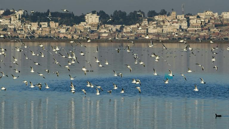 Seagulls fly over the Sijoumi mudflat, where more than 100,000 birds of some 100 different species spend winter