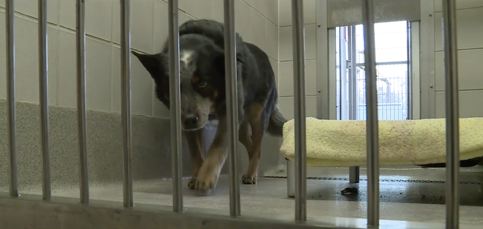 Baby Dog stayed with his owner's body until they were discovered by police. Source: CBS13