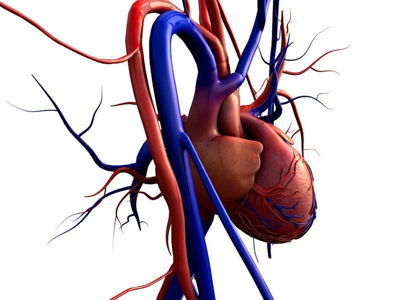 Drawing of a heart with arteries extending out of it.