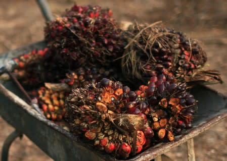 Palm oil fruits are seen placed on a wheelbarrow at a palm oil farm in Klang, outside Kuala Lumpur