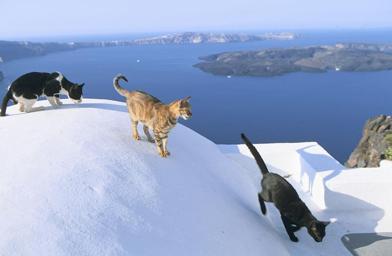 Cat lovers offered free house on attractive  Greek Island with 55 cats
