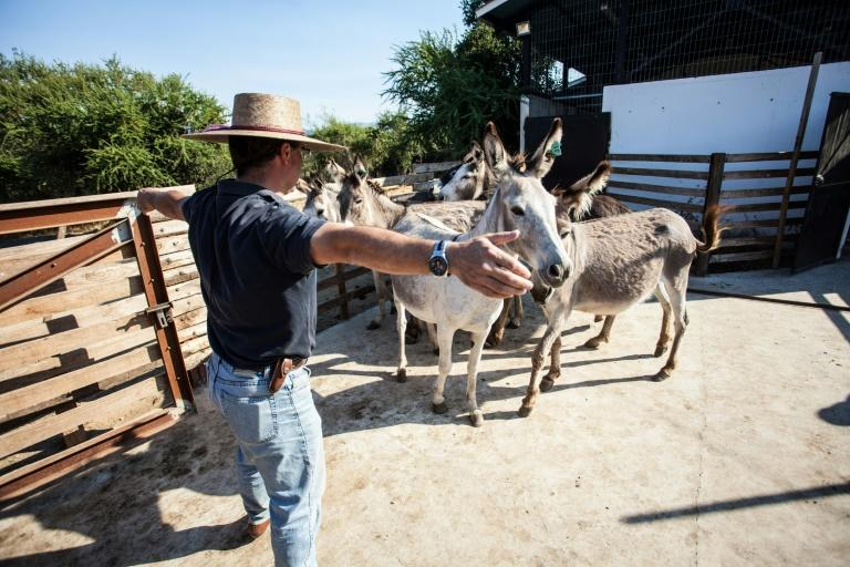 Dr German Errazuriz took the advice of a patient's relatives in southern Chile and began prescribing donkey's milk to children intolerant to milk formulas