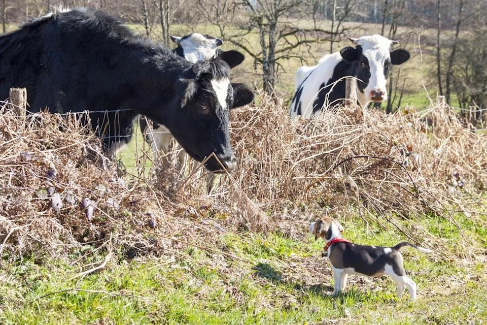 No fence can keep these animal pals apart.