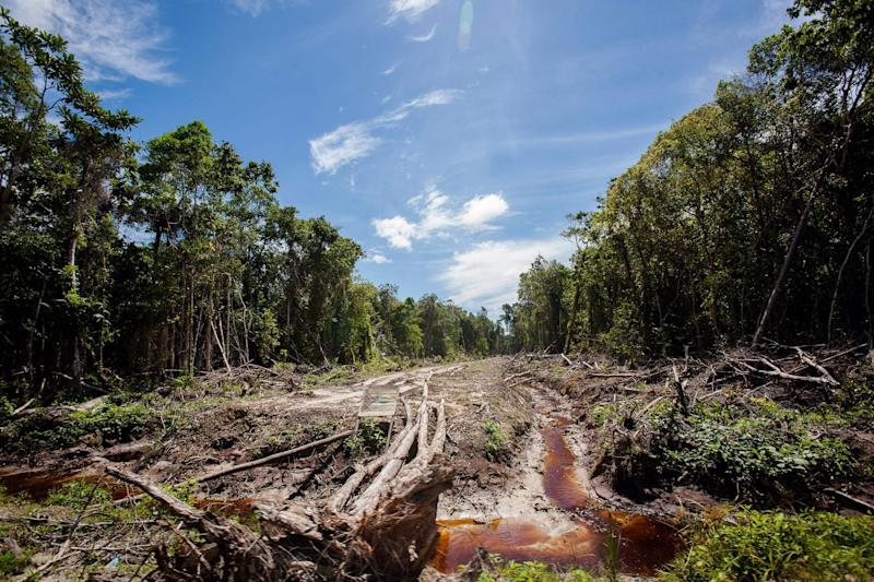 Forest being cleared for palm oil plantations (AFP/Getty Images)
