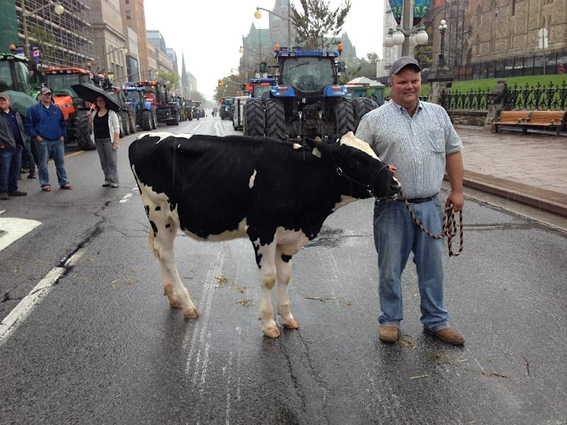 Dairy farmers protest the Trans-Pacific Partnership (TTP) on September 29, 2015 in Ottawa, Ontario (AFP Photo/Michel Comte)
