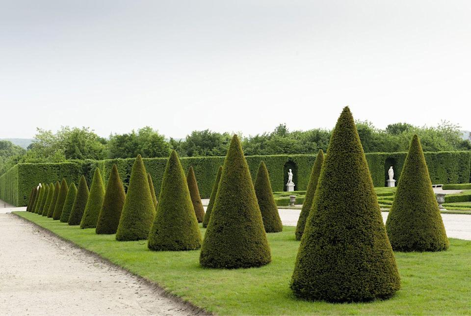 <p>The yew plant produces a soft texture that makes it a handsome, and low-key addition to any garden. Yew, like the boxwood plant, responds well to shaping and trimming and is fairly hardy when it comes to staving off illnesses. </p><p><strong><br></strong><strong>Where to plant:</strong> Full to partial sun<br><strong>USDA Hardiness Zones:</strong> 4 to 8</p>