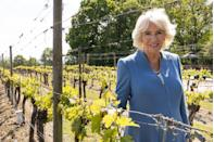 <p>In mid-May, the Duchess of Cornwall visited a stunning wine estate in Ditchling.</p>