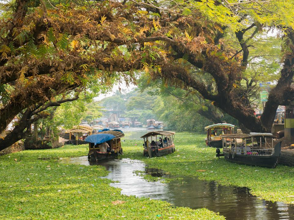 Houseboats on the backwaters of Kerala in Alappuzha (Alleppey).