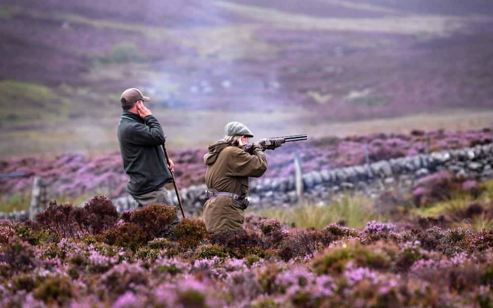 Justin Muir takes a shot on first day of the grouse shooting season on Forneth Moor on August 13, 2018 in Dunkeld, Scotland - Jeff J Mitchell/Getty