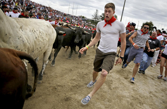 A participant runs alongside charging bulls during the Great Bull Run at the Georgia International Horse Park, Saturday, Oct. 19, 2013, in Conyers, Ga. The event, expected to attract 3,000 runners Saturday, is inspired by the annual running of the bulls in Pamplona, Spain and has future stops planned in Texas, Florida, California, Illinois and Pennsylvania. (AP Photo/David Goldman)