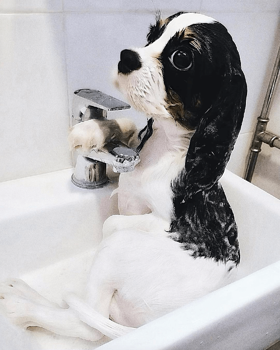 <p>We love how relaxed little Coconut looks bathing in the sink 🛁</p>