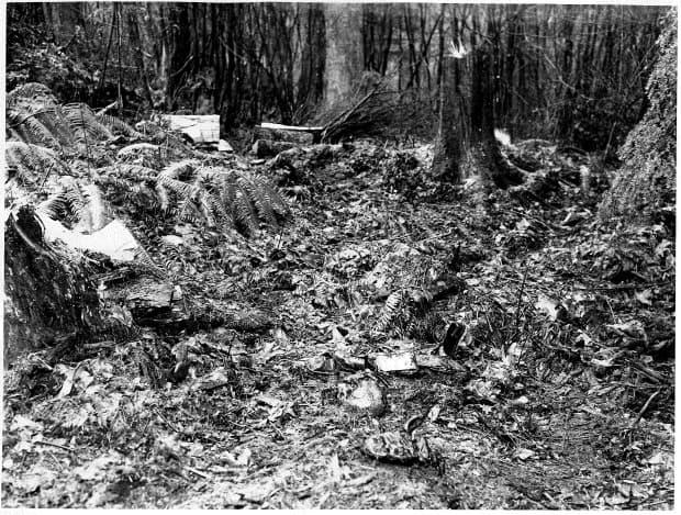 A police file photo of the scene where the boys' remains were discovered by a Stanley park groundskeeper in 1953. (Vancouver Police - image credit)