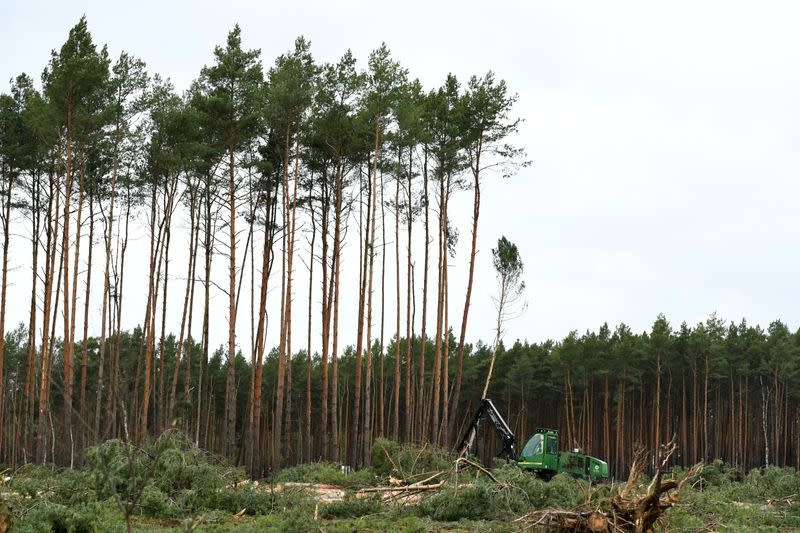 A worker cuts trees at the area where U.S. electric vehicle pioneer Tesla plans to build a Gigafactory in Gruenheide