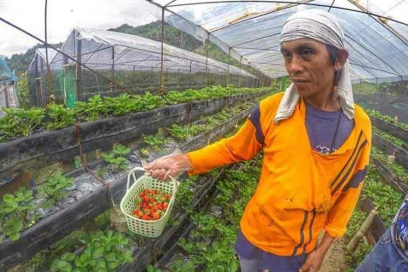 Farm tourism first to take off post-pandemic