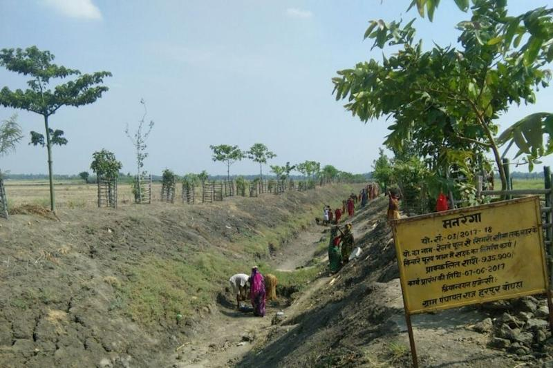 This Bihar Village Has Done the Impossible by Converting a Wasteland into an Oasis