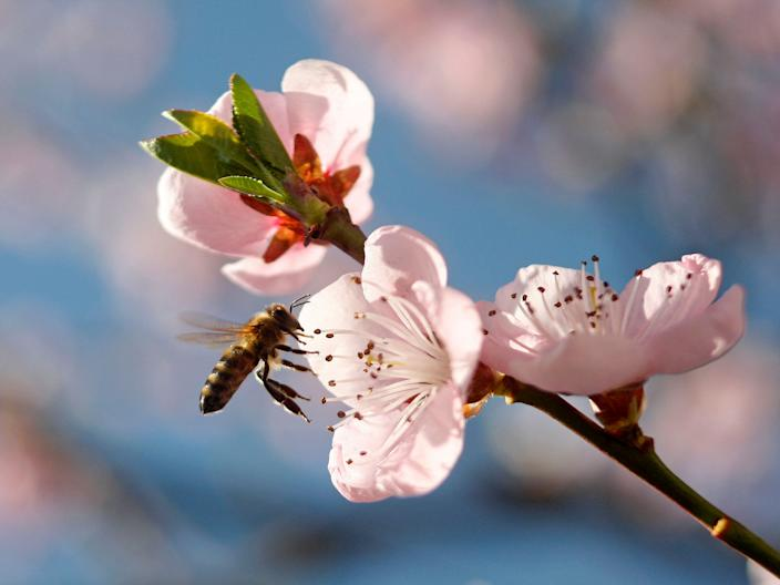 Bees pollinate flowers and crops, and some species make honey.
