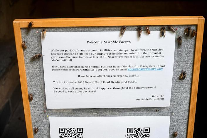 <p>Cicadas and their exoskeleton cover a sign in front of the Nolde Mansion at the Nolde Forest Environmental Education Center in Cumru Township, Pennsylvania, on May 24.</p>