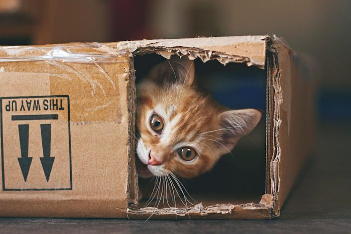 Ginger kitten playing with a cardboard box.