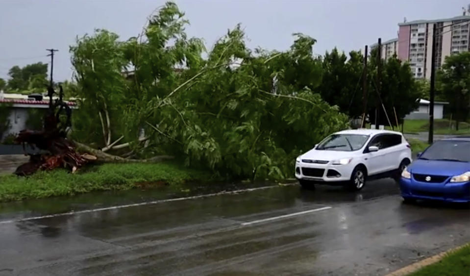 In this image made from video, a large tree toppled by tropical storm winds is seen in Alto Trujillo, Puerto Rico, Thursday, July 30, 2020. Tropical Storm Isaias knocked out power and caused flooding and small landslides across Puerto Rico and the Dominican Republic on Thursday as forecasters predicted it would strengthen into a hurricane while moving toward the Bahamas and U.S. East Coast.(AP Photo)