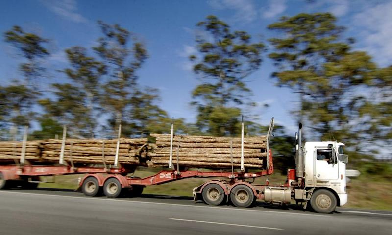 Logs are transported by a truck in Launceston