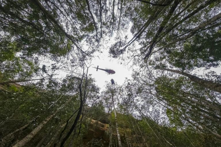 A firefighter rappels into a gorge as a crew tries to save pre-historic Wollemi Pines in the Blue Mountains (AFP Photo/HO)