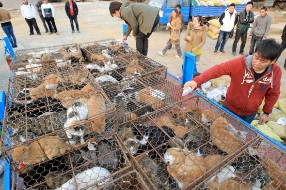 Truck overloaded with five hundred cats intercepted en route to restaurants in China