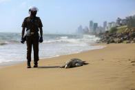 A Sri Lankan policeman looks at a dead turtle that washed ashore in Colombo, Sri Lanka, June 10, 2021. Carcasses of nearly a hundred turtles believed to have been killed due to heat and chemical poisoning from a fire-ravaged ship that sank off while transporting chemicals have been washed to Sri Lanka's ashore in recent weeks, raising fears of a severe marine disaster. (AP Photo/ Krishan Kariyawasam)