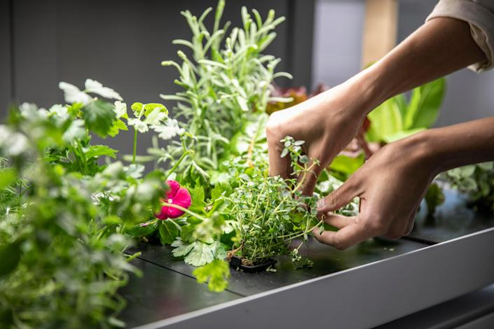 Rise Gardens WiFi-connected, mobile app-guided hydroponic system.
