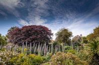 """<p>The Isle of Wight is often called the 'Garden Isle' thanks to its sunny, warmer-than-average weather and abundance of exotic plants. Ventnor Botanic Gardens on the island's capital is full of rare trees and bright clerodendron, as well as another 32,000 plants. </p><p>In these balmy, subtropical surrounds, you can catch charming outdoor performances, take the kids and grandkids for children's story time and even treat yourself to wellbeing classes.</p><p><a class=""""link rapid-noclick-resp"""" href=""""https://go.redirectingat.com?id=127X1599956&url=https%3A%2F%2Fwww.booking.com%2Fcity%2Fgb%2Fventnor.en-gb.html%3Faid%3D2070935%26label%3Disle-of-wight-things-to-do&sref=https%3A%2F%2Fwww.countryliving.com%2Fuk%2Ftravel-ideas%2Fstaycation-uk%2Fg36260567%2Fisle-of-wight-things-to-do%2F"""" rel=""""nofollow noopener"""" target=""""_blank"""" data-ylk=""""slk:BROWSE PLACES TO STAY IN VENTNOR"""">BROWSE PLACES TO STAY IN VENTNOR</a></p><p><a href=""""https://www.instagram.com/p/BtLzH67A8Mt/"""" rel=""""nofollow noopener"""" target=""""_blank"""" data-ylk=""""slk:See the original post on Instagram"""" class=""""link rapid-noclick-resp"""">See the original post on Instagram</a></p>"""