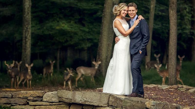 What Happens When Deer Photobomb Your Wedding Pic