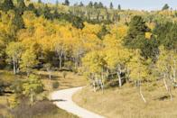 """<p><strong>Where to go:</strong> You'll miss the summer crowds at Mount Rushmore by timing your Black Hills vacation to the fall foliage. Golden aspen and birch trees line the roads as you cruise through the surrounding national forest. </p><p><strong>When to go:</strong> Late October or Early November</p><p><a class=""""link rapid-noclick-resp"""" href=""""https://go.redirectingat.com?id=74968X1596630&url=https%3A%2F%2Fwww.tripadvisor.com%2FHotels-g4007682-The_Black_Hills_South_Dakota-Hotels.html&sref=https%3A%2F%2Fwww.redbookmag.com%2Flife%2Fg34045856%2Ffall-colors%2F"""" rel=""""nofollow noopener"""" target=""""_blank"""" data-ylk=""""slk:FIND A HOTEL"""">FIND A HOTEL</a></p>"""