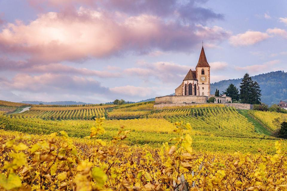 <p>These French vineyards seem so serene in autumn.</p>