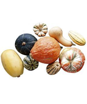 """<div class=""""caption-credit""""> Photo by: Pamela Moore/Getty Images</div><b>Winter Squashes</b> <br> Varieties such as acorn, butternut, delicata, and spaghetti will last for about a month or more in the pantry."""