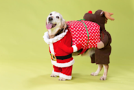 """<p>Let your pet join in with all the fun over Christmas in this fancy dress costume! Perfect for parties or to wear on Christmas day, make sure your four-legged helper looks the part throughout the holiday season.</p><p>£24.99 <a href=""""http://www.petspyjamas.com/product/christmas-santa-rudolph-fancy-dress-for-dogs/HOP-00159/?gclid=CJrVibjHoNACFY0aGwodMgYH-w"""" rel=""""nofollow noopener"""" target=""""_blank"""" data-ylk=""""slk:Pets Pyjamas"""" class=""""link rapid-noclick-resp"""">Pets Pyjamas </a></p>"""