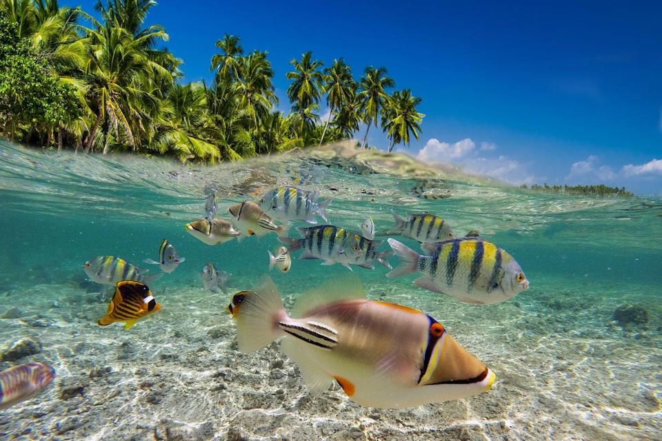"""<p>Tropical fish swim near the surface of crystal clear, blue water. It's believed that the Maldives, Bahamas, and Greece possess some of the <a href=""""https://www.travelzoo.com/blog/20-bluest-waters-world/"""" rel=""""nofollow noopener"""" target=""""_blank"""" data-ylk=""""slk:bluest seawater"""" class=""""link rapid-noclick-resp"""">bluest seawater</a> in the world.</p>"""