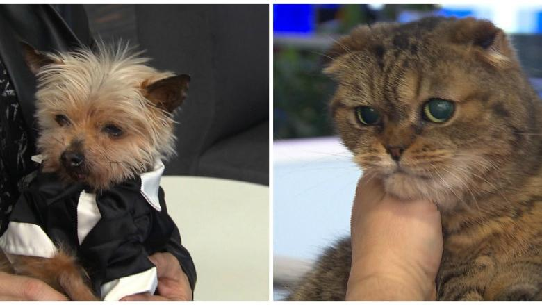 What's the secret to a long life? This dog and cat may know