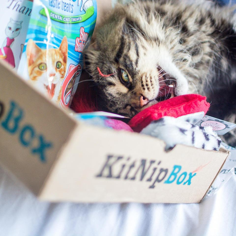 KitNipBox subscription boxes are 35 percent off today. (Photo: Amazon)