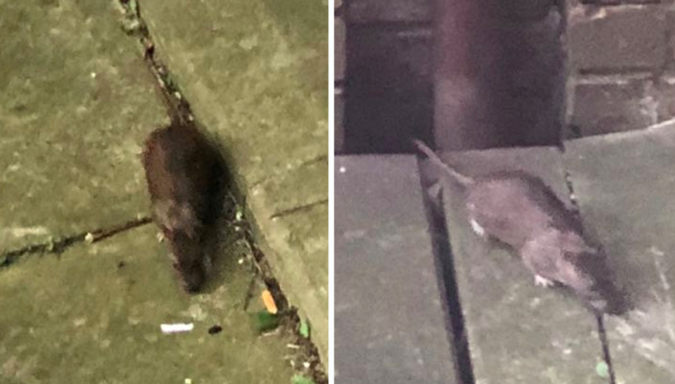 <em>Mum Kaylee Kennedy claims the rats have taken over neighbourhood (SWNS)</em>